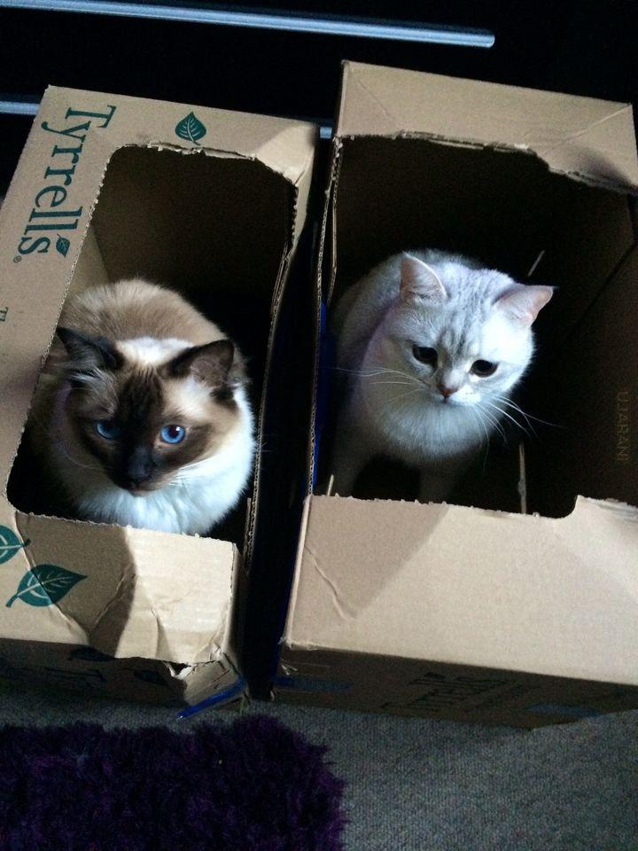 Jak zrobic zdjecie dwóch kotów za jednym razem.