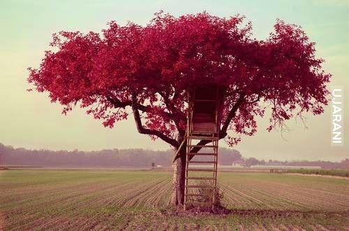 Domeczek na drzewie.