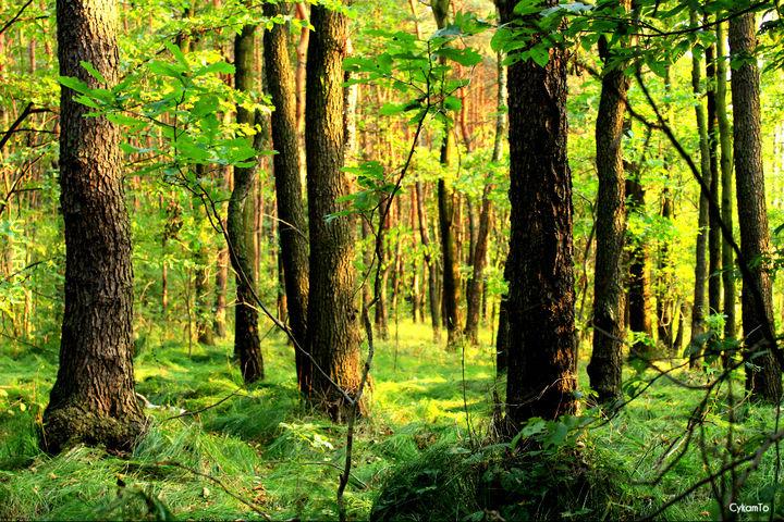 Bo w lesie jest spokój