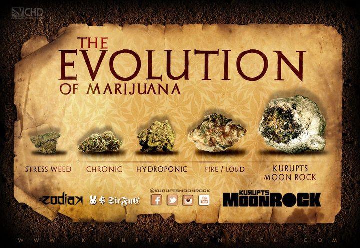 Evolucja