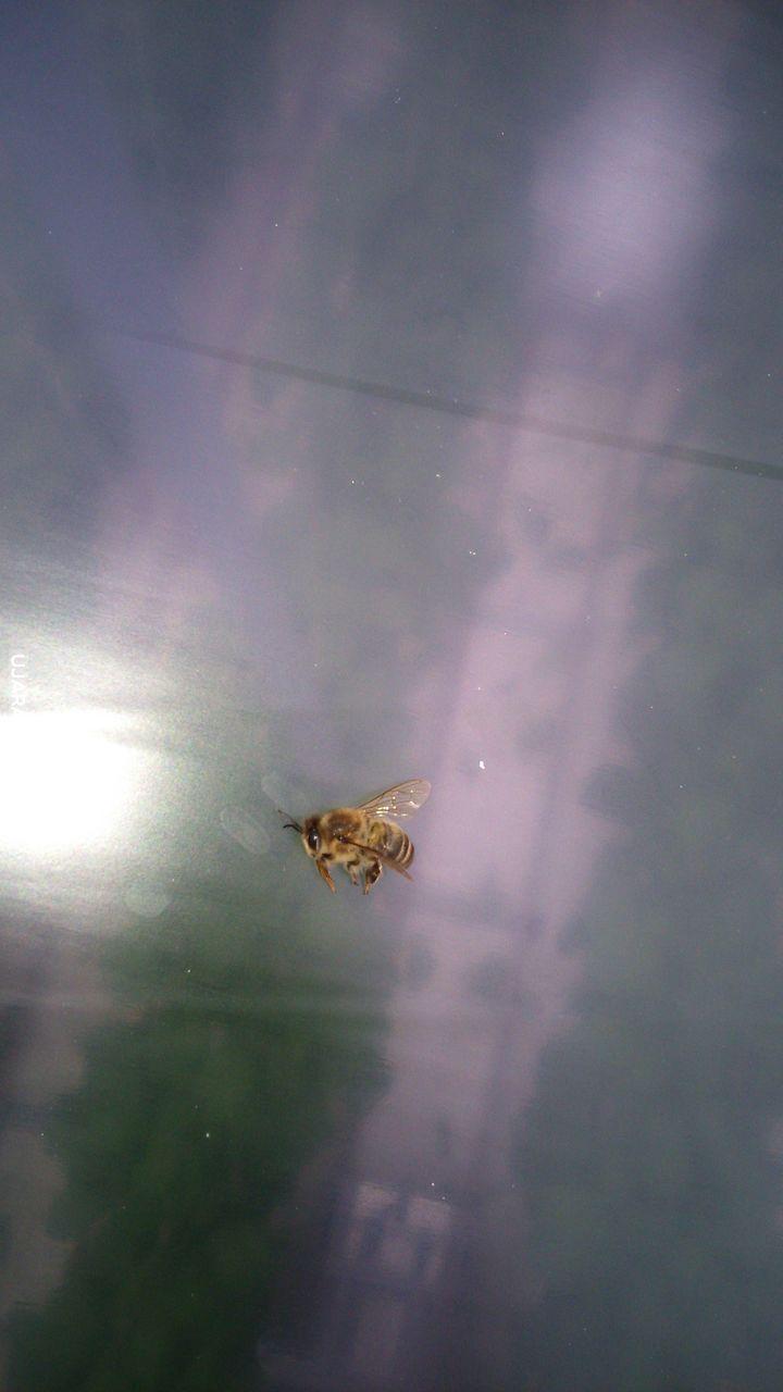Pan pszczół.