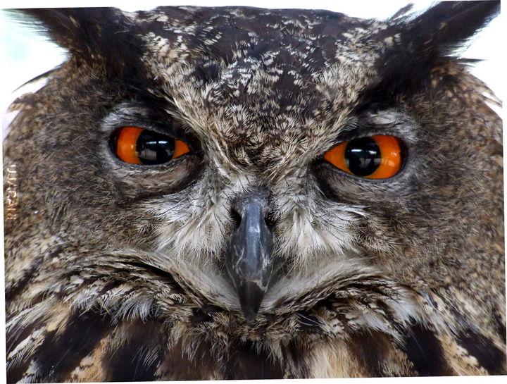 persuasive essay owl purdue edu owl similar articles