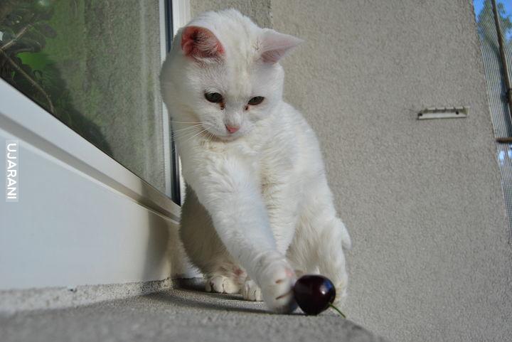 Kot z wiśnią
