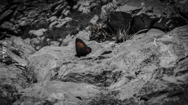 Przyjaciel z gór
