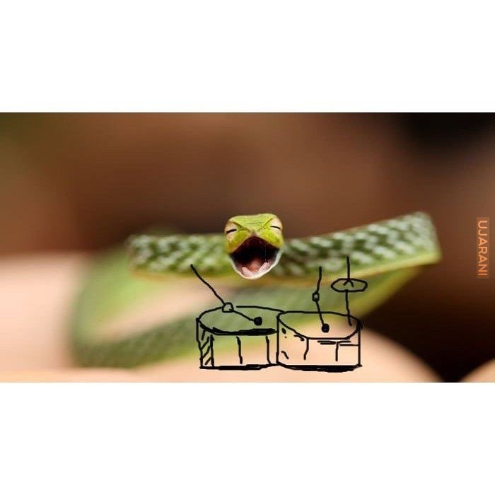 Happy snakes.