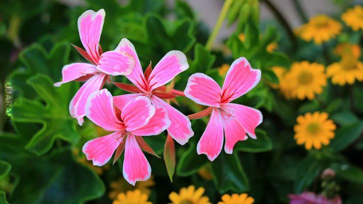 Kolorowe kwiatki.