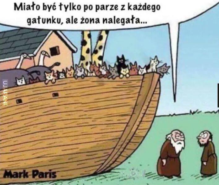KociArka Noego