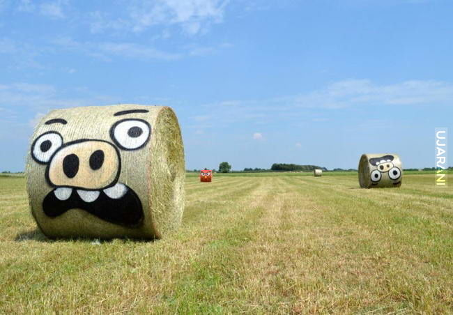 Angry Hay
