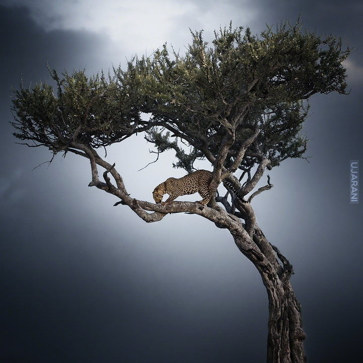 Travel Photographer of the Year 2013