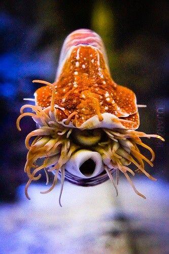 Dziwne stworzenie.