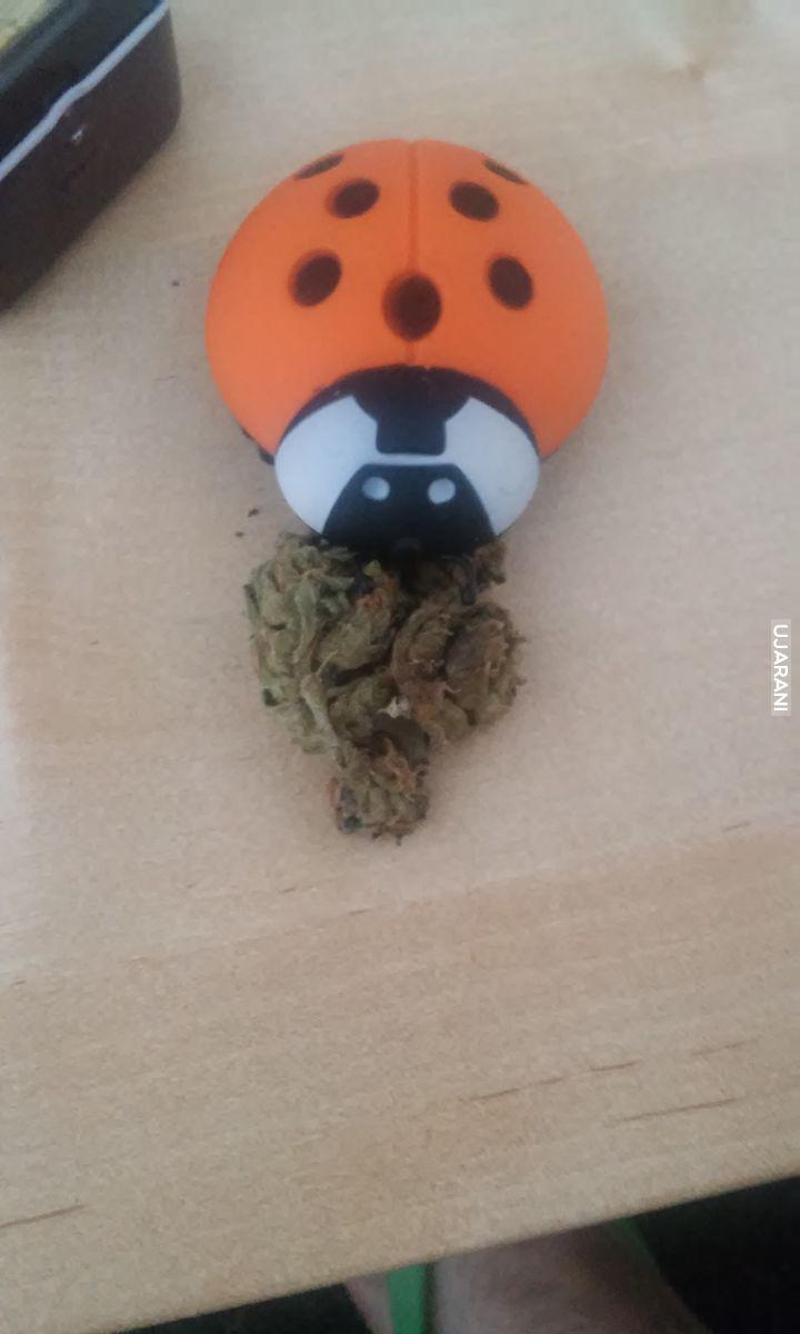 new grinder & buddah weed