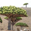 Sokotra, Jemen
