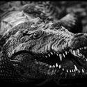 Krokodyli uśmiech ;)