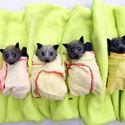 Małe nietoperki