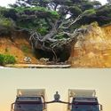 Van Tree