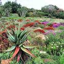 ogród kristenbosch w kapsztadzie