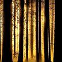 Leśny klimat (35)