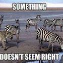 Coś jest nie tak...
