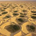 oaza adjder algieria