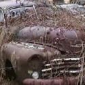 Pewna kolekcja aut