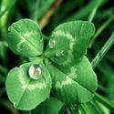 Zielone szczęscie ;)