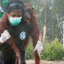 Na ratunek orangutanom