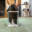 Ciekły kot