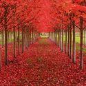 Jesiennie. Historia drzew (21)
