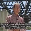 **Szyszynka & DMT**