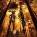 Leśny klimat (18)