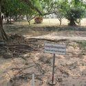 Masowy grób