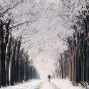 Historia drzew (18)