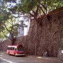 Drzewka