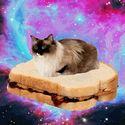Koty + jedzenie = Ujarani