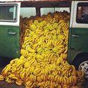 Banany, banany, banany
