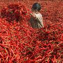 Zbiory Chili