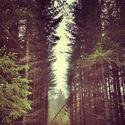 ściany lasu