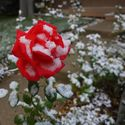 Pierwsze śniegi