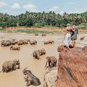 Pinnawala - sierociniec dla Słoni na Sri Lance
