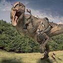 T-rex vs. Koty