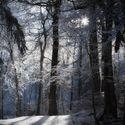 Leśny klimat (60)