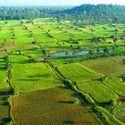 pola w kambodży