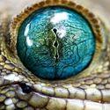 geckon