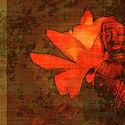 Budda & róża