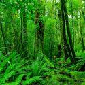Leśny klimat (62)