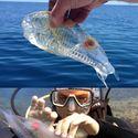 Przeźroczysta rybka