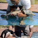mały delfinek