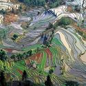 pola ryżowe w Chinach