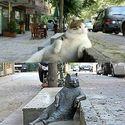 Po śmierci zrobiono kotku pomnik