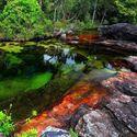 Caño Cristales rzeka pięciu kolorów - kolumbia